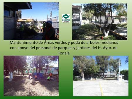 mantto areas verdes